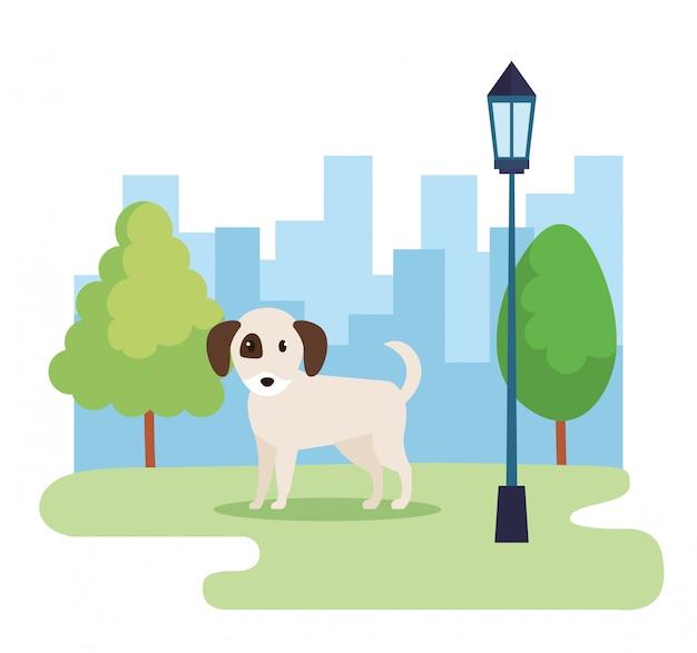 Ładny pies w parku Darmowych Wektorów