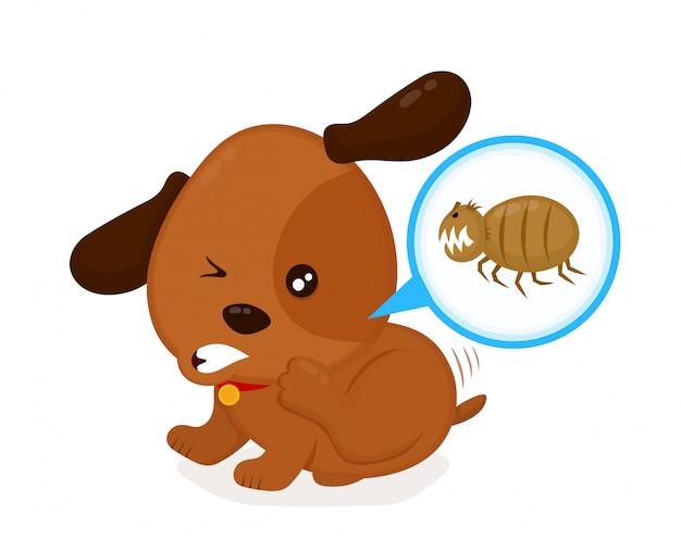 Ładny, zły, swędzący pies drapie pchły. pies domowy lub bezpański z pasożytami skórnymi. Premium Wektorów