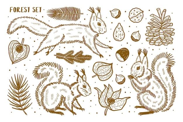 Las Zestaw Elementów, Clipart. Zwierzęta, Przyroda, Rośliny. Wiewiórka, Sosna, Orzech, Gałąź, Nasiona, Pęcherzyca, Czereśnia Zimowa. Sylwetka. Premium Wektorów