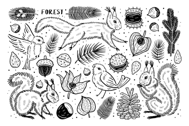Las Zestaw Elementów Clipartów Natura Rośliny. Wiewiórka, Ptak, Sosna, Orzech I Kasztanowiec Z Gałęzi Physalis Winter Cherry Premium Wektorów