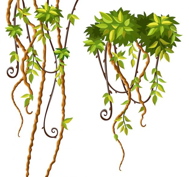 Liany Gałęzie I Liście. Darmowych Wektorów
