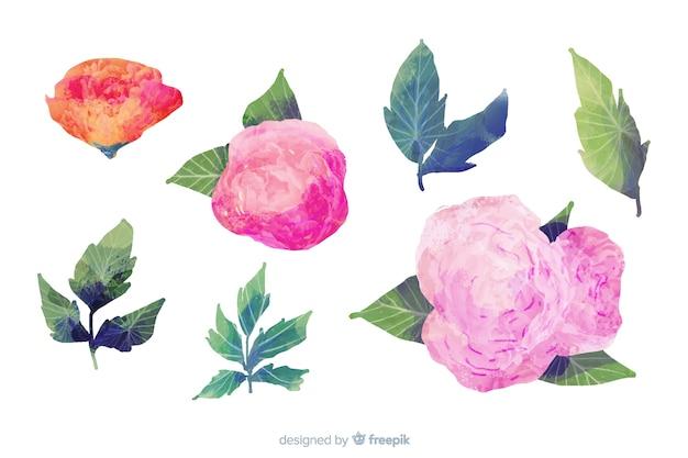 Liście I Kwiaty Na Akwarela Darmowych Wektorów
