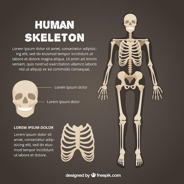 Ludzki Szkielet Szablon Premium Wektorów