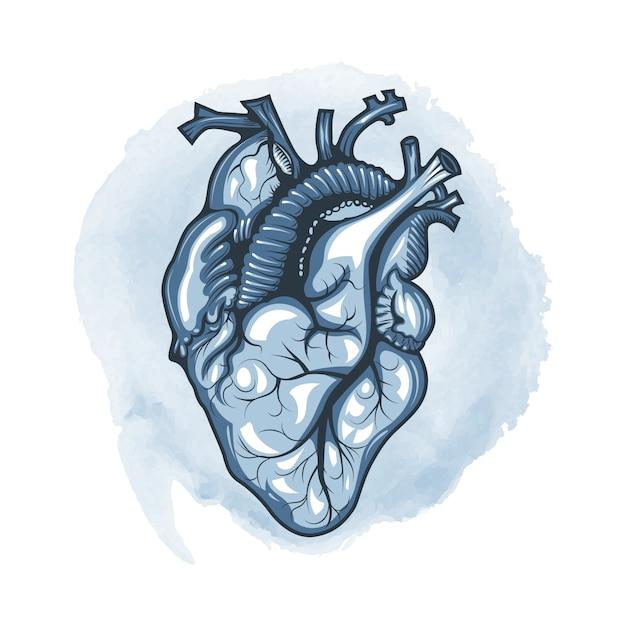 Ludzkie Serce Narysowane Szczegółowo Na Tle Pętli Akwarela. Premium Wektorów