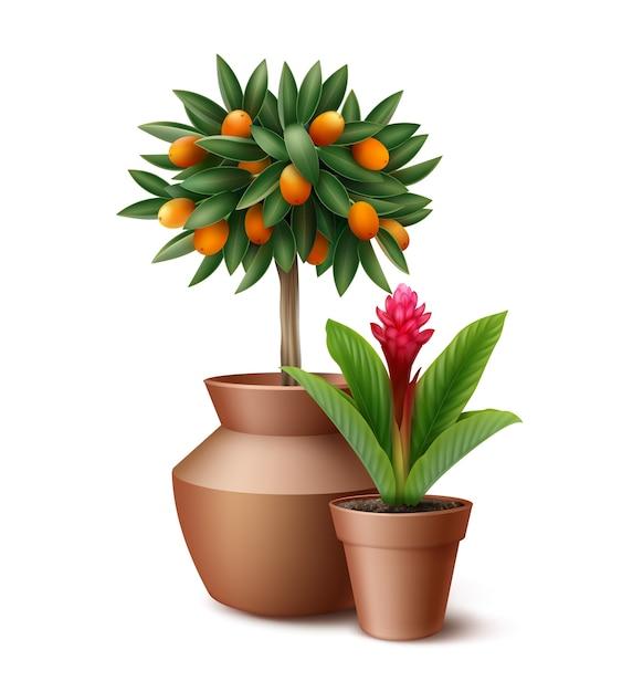 Małe Drzewo Cytrusowe I Kwitnący Kwiat W Glinianych Doniczkach Na Białym Tle Darmowych Wektorów