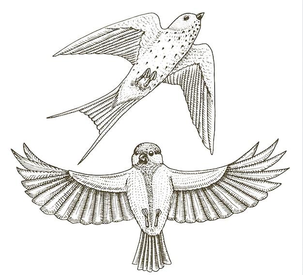 Małe Ptaki W Stodole Połykają Lub Martlet I Parus Lub Sikorkę Lub Bogatka W Europie. Ikony Egzotycznych Zwierząt Tropikalnych. Premium Wektorów