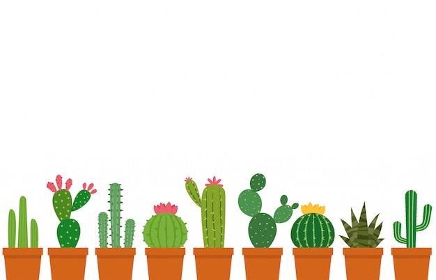 Mały zestaw doniczkowy kaktusa Premium Wektorów