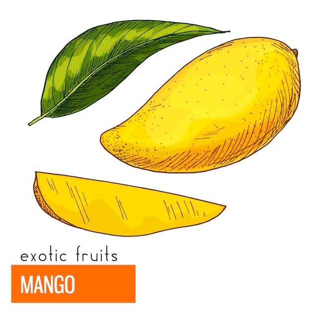 Mango. Kolor Ilustracji Wektorowych. Premium Wektorów