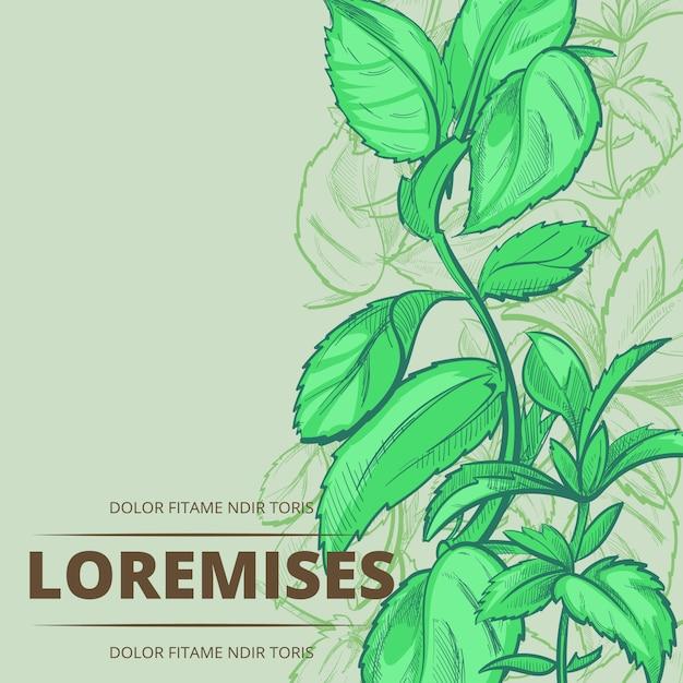 Miętowe Rośliny I Liście Plakat Tło Premium Wektorów