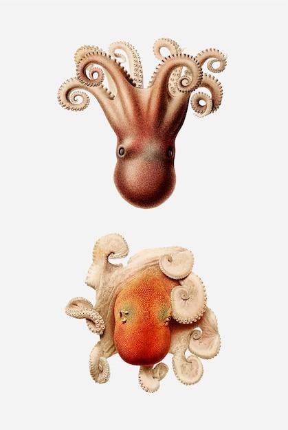 Morze Ośmiornice W Stylu Vintage Darmowych Wektorów