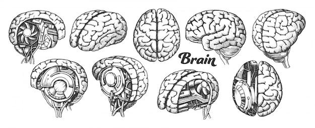 Mózg Premium Wektorów