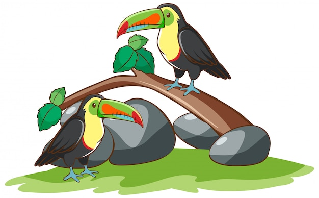 Na Białym Tle Ręcznie Rysowane Dwóch Ptaków Tukan Darmowych Wektorów