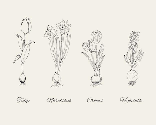 Naszkicuj Naturalne Botaniczne Rośliny Z Wiosennymi Kwiatami Na Szaro Darmowych Wektorów