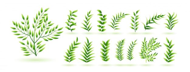 Naturalna Kolekcja Zielonych Liści Ziół Darmowych Wektorów