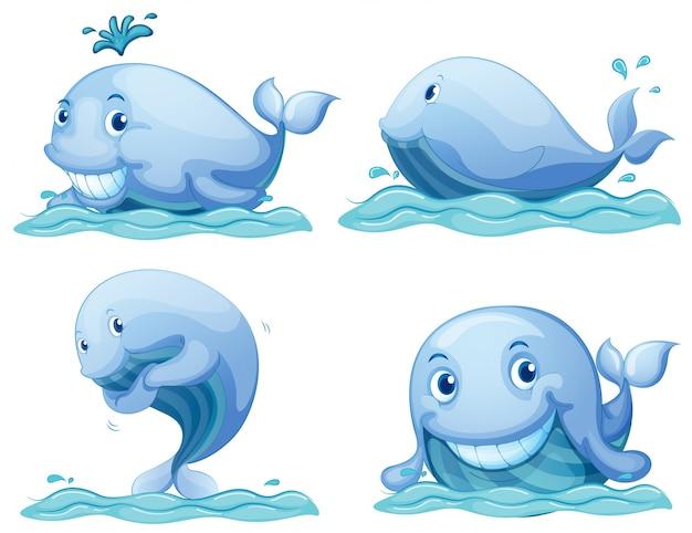 Niebieskie wieloryby Darmowych Wektorów