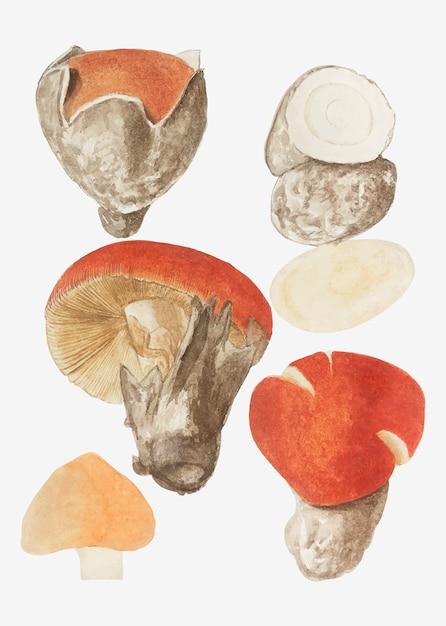 Odmiana Mushroom w stylu vintage Darmowych Wektorów