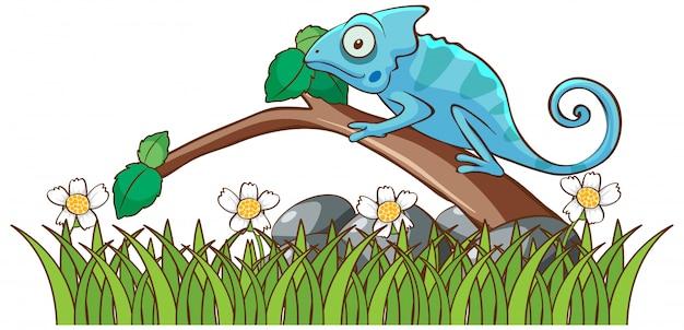 Odosobniony Obrazek Kameleon Na Gałąź Darmowych Wektorów