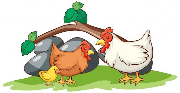 Odosobniony Obrazek Kurczaki W Ogródzie Darmowych Wektorów