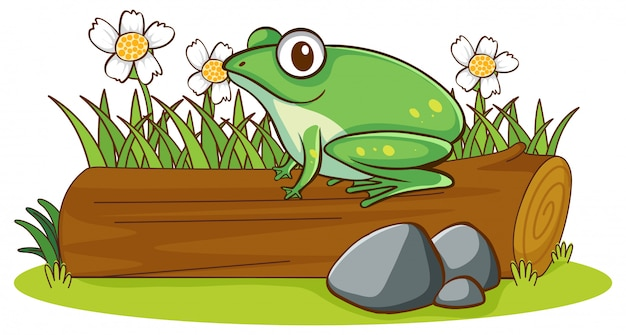 Odosobniony Obrazek żaba Na Beli Darmowych Wektorów