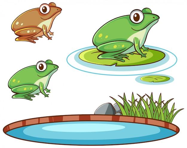 Odosobniony Obrazek żaby I Staw Darmowych Wektorów