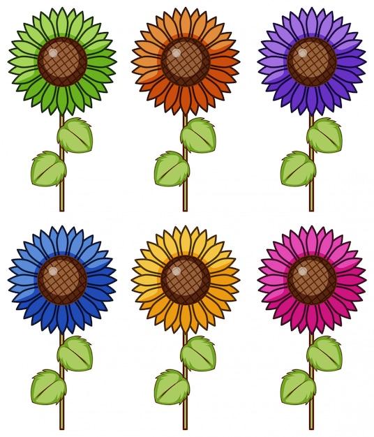 Odosobniony Set Kwiat W Różnych Kolorach Darmowych Wektorów