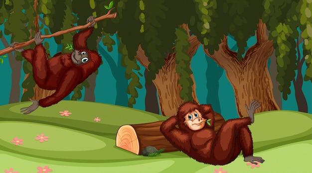Orangutany w scenie dżungli Premium Wektorów