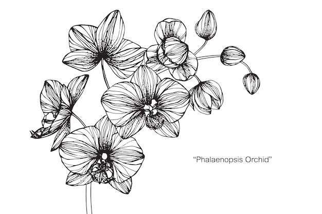 Orchidea Premium Wektorów