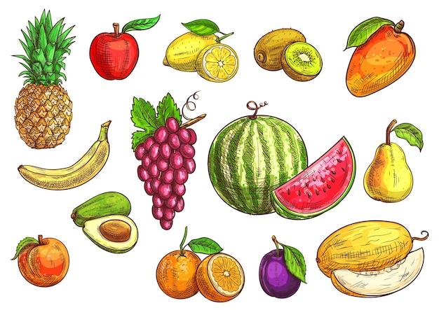 Owoce Szkicu Ręcznie Rysowane Banan, Jabłko, Awokado, Brzoskwinia, Czerwone Winogrona, Cytryna, Pomarańcza, Arbuz, Kiwi, śliwka, Mango Gruszka Melon Premium Wektorów