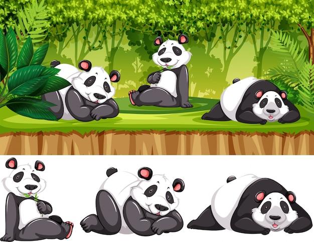 Panda na wolności Darmowych Wektorów