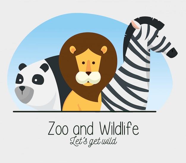 Panda z rezerwą dzikich zwierząt lwa i zebry Darmowych Wektorów