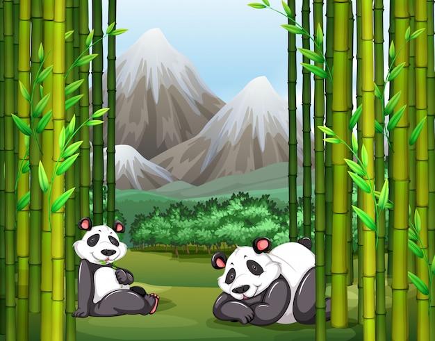 Pandy i bambusowy las Darmowych Wektorów