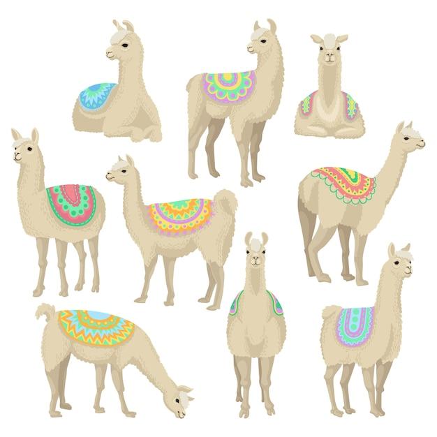 Pełen Wdzięku Zestaw Lamy, Zwierzę Alpaki W Ozdobnym Ponczo Stwarzające W Różnych Sytuacjach Ilustracje Na Białym Tle Premium Wektorów