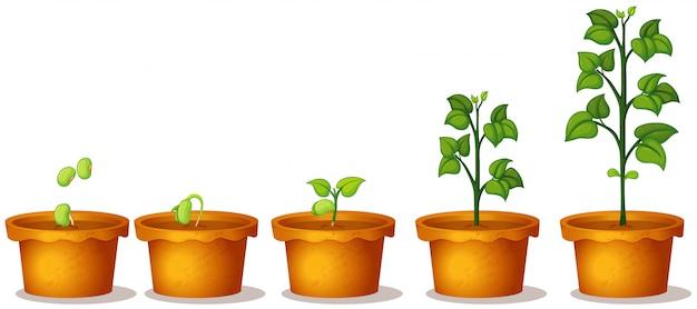 Pięć Doniczkowych Rośliien Z Zielonymi Roślinami Na Białym Tle Premium Wektorów