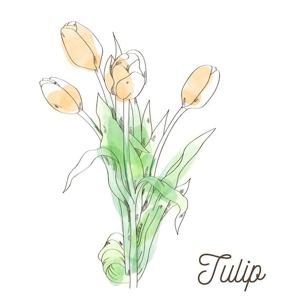 Piękna Tulipanowa Ilustracja Na Białym Tle Premium Wektorów