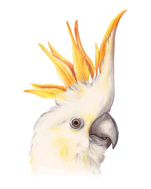 Piękna żółta Kakadu Papuga Premium Wektorów