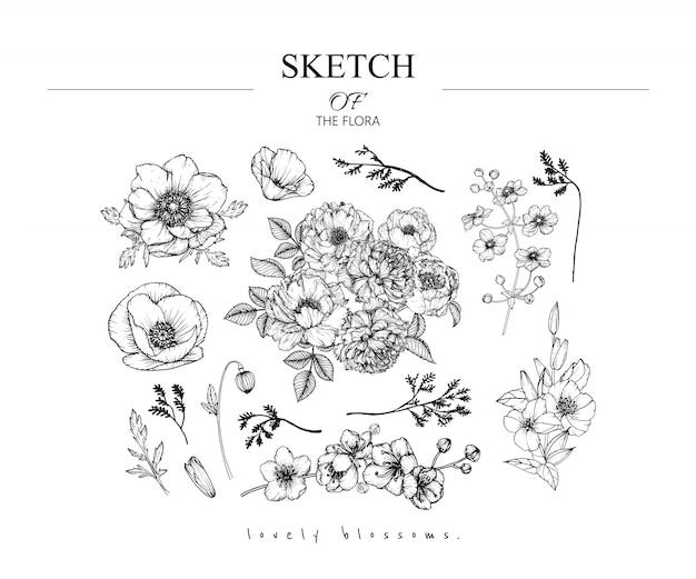 Piękne rysunki liści i kwiatów Premium Wektorów
