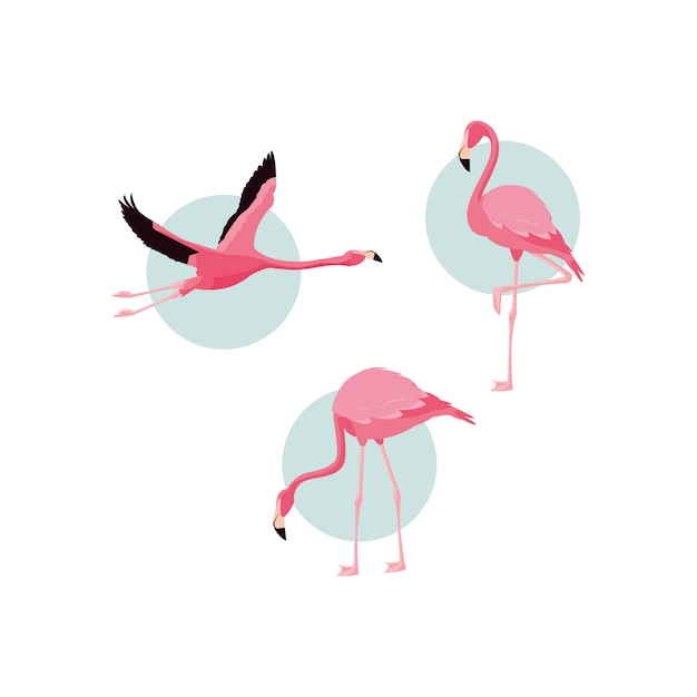 Piękne Stada Ptaków Flamingów Premium Wektorów