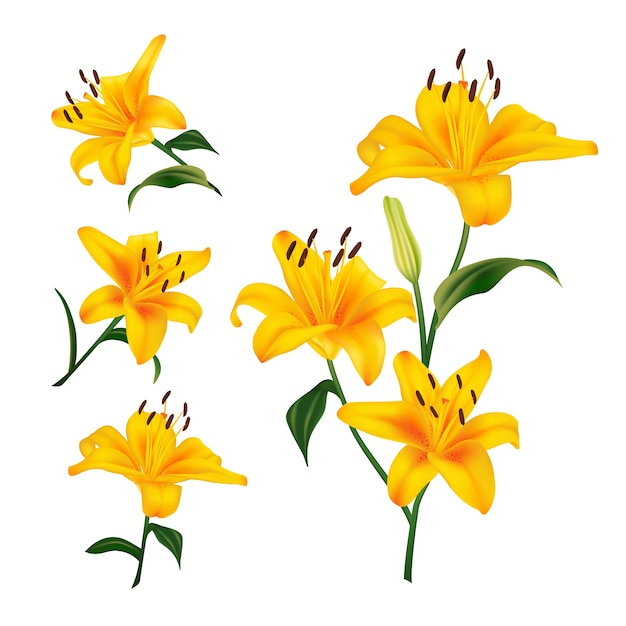 Piękne żółte Kwiaty Lilii. Realistyczne Elementy Etykiet Produktów Kosmetycznych Do Pielęgnacji Skóry. Ilustracja Premium Wektorów