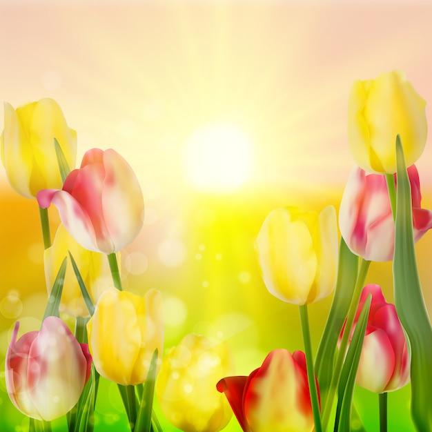 Piękny Bukiet Tulipanów. Premium Wektorów