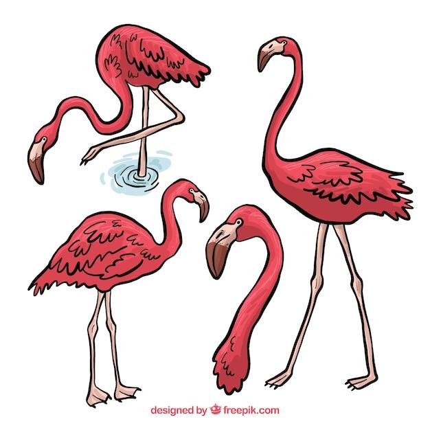 Piękny zestaw ręcznie rysowane flamingi Darmowych Wektorów
