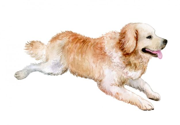 Pies Golden Retriever W Akwareli Premium Wektorów