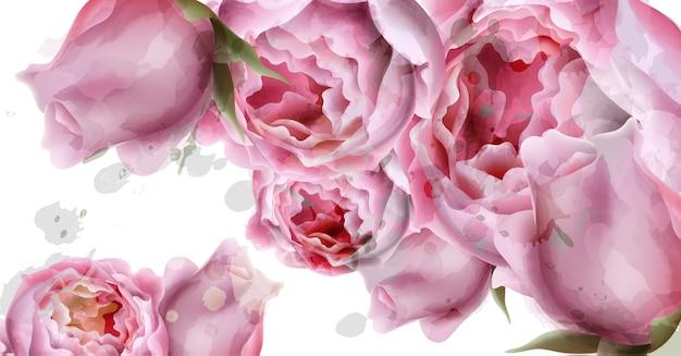 Piwonia kwiaty tle akwarela Premium Wektorów