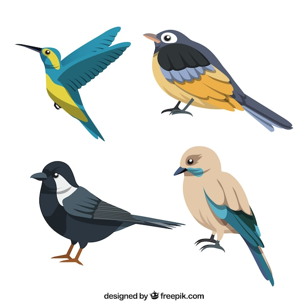 Płaska Kolekcja Ptaków Darmowych Wektorów