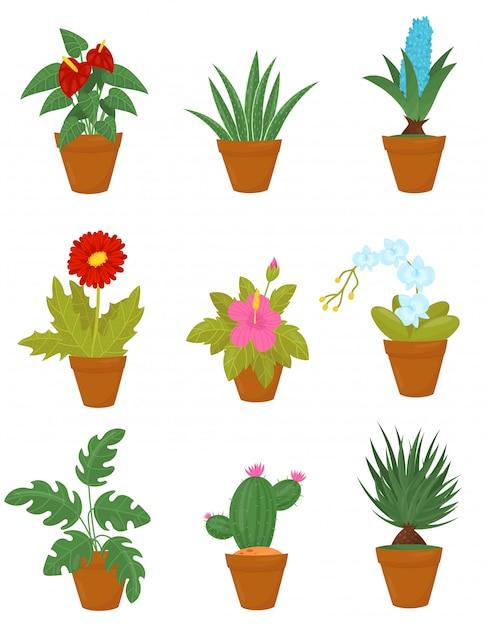 Płaski Zestaw Roślin Domowych W Brązowych Doniczkach Ceramicznych. Rośliny Doniczkowe Z Zielonymi Liśćmi I Kwitnącymi Kwiatami Premium Wektorów