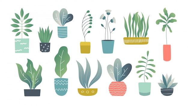 Płaskie Rośliny Doniczkowe. Rośliny Ogrodowe Doodle W Pomieszczeniach, Słodkie Sukulenty Wewnętrzne I Rośliny Domowe. Wyciągnąć Rękę Premium Wektorów