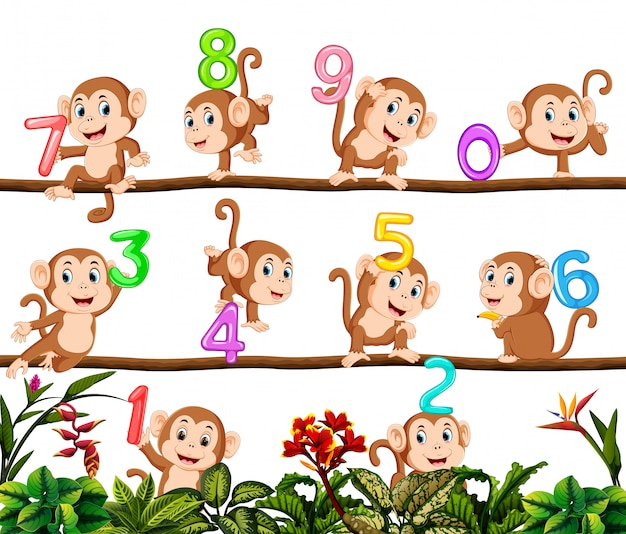 Policzmy z małpką Premium Wektorów
