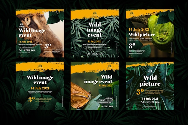 Posty Na Instagramie Dzikiej Przyrody Darmowych Wektorów