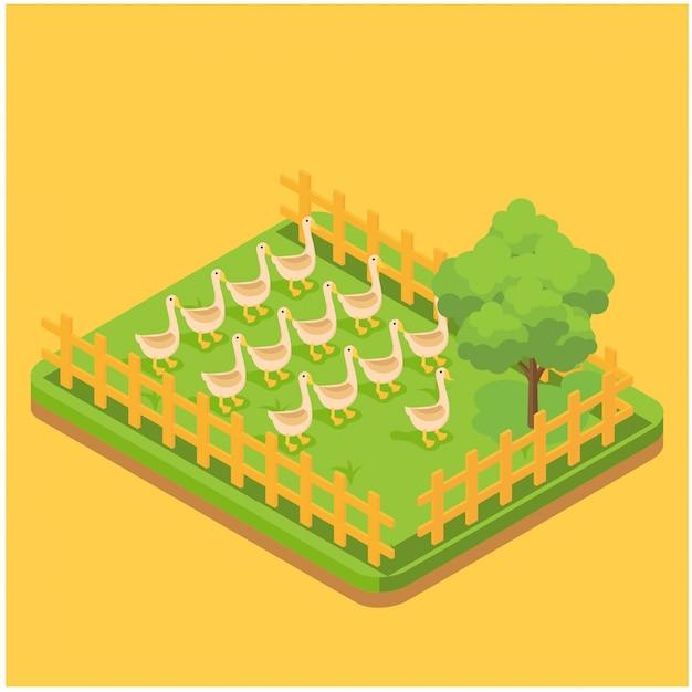 Produkcja jaj skład izometryczny z obrazami kaczek żerujących na trawie na ilustracji wektorowych strony gospodarstwa Premium Wektorów