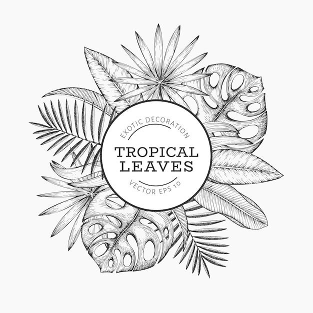 Projekt Transparentu Roślin Tropikalnych. Ręcznie Rysowane Tropikalne Lato Egzotyczne Liście Ilustracja. Premium Wektorów