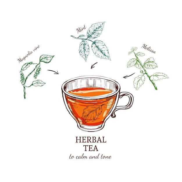 Przepis Na Szkic Ziołowej Herbaty Darmowych Wektorów